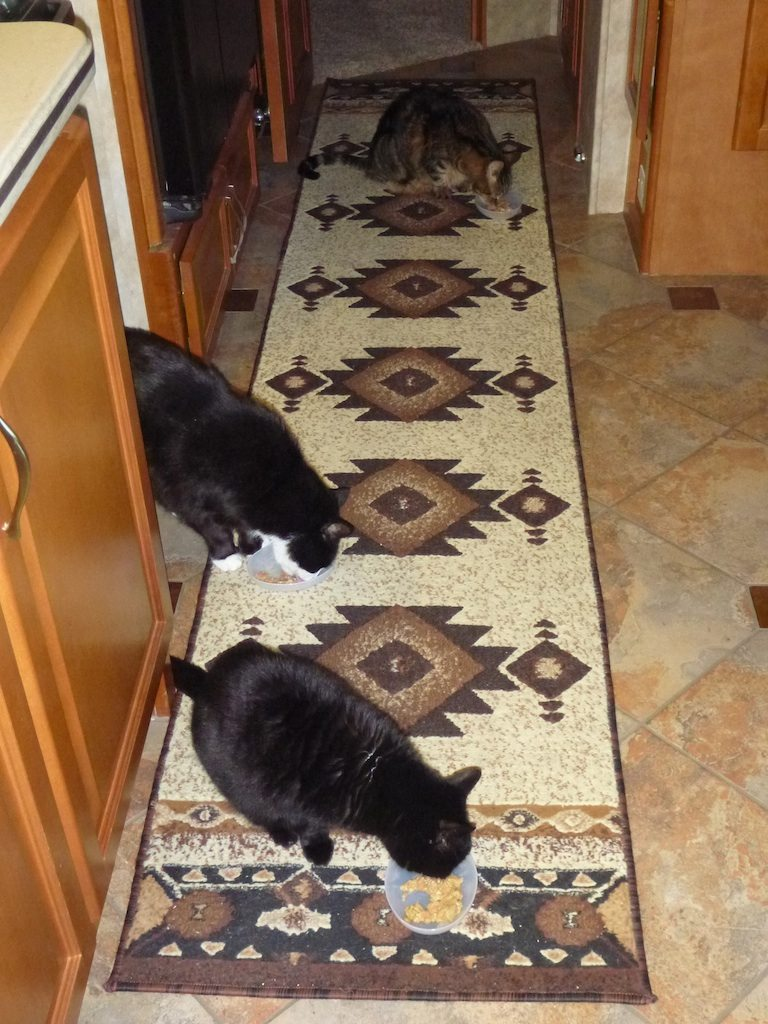 Angel, BK And Tory Eating Their Raw Food Diet