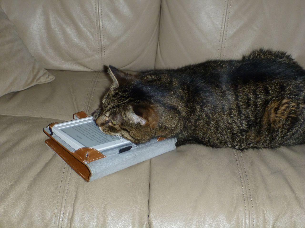 Whisper Reading My Kindle