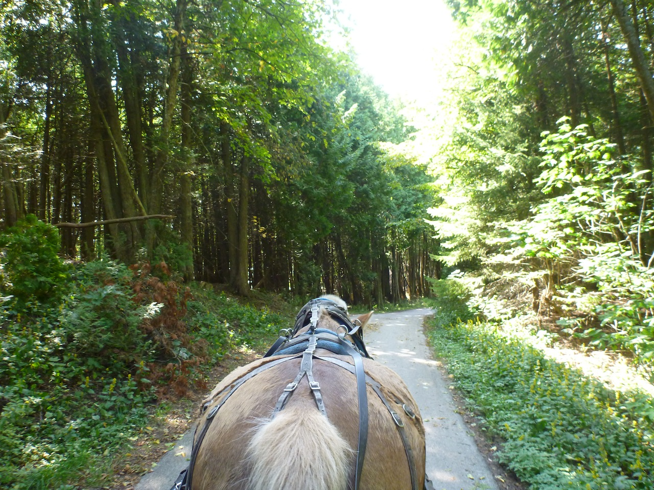 The Carriage Trail Through The State Park