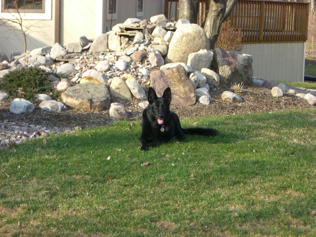 Tasha Enjoying The Sun In Front Of Our Home
