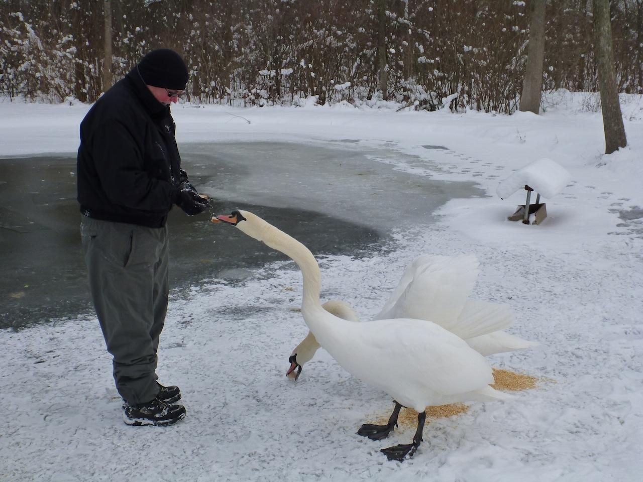 David Feeding The Swans