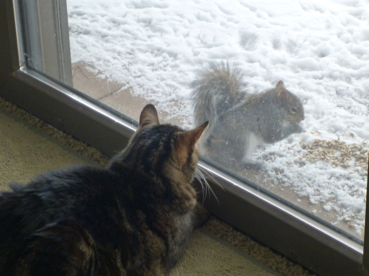 "Tory Enjoying ""The Squirrel Show"""