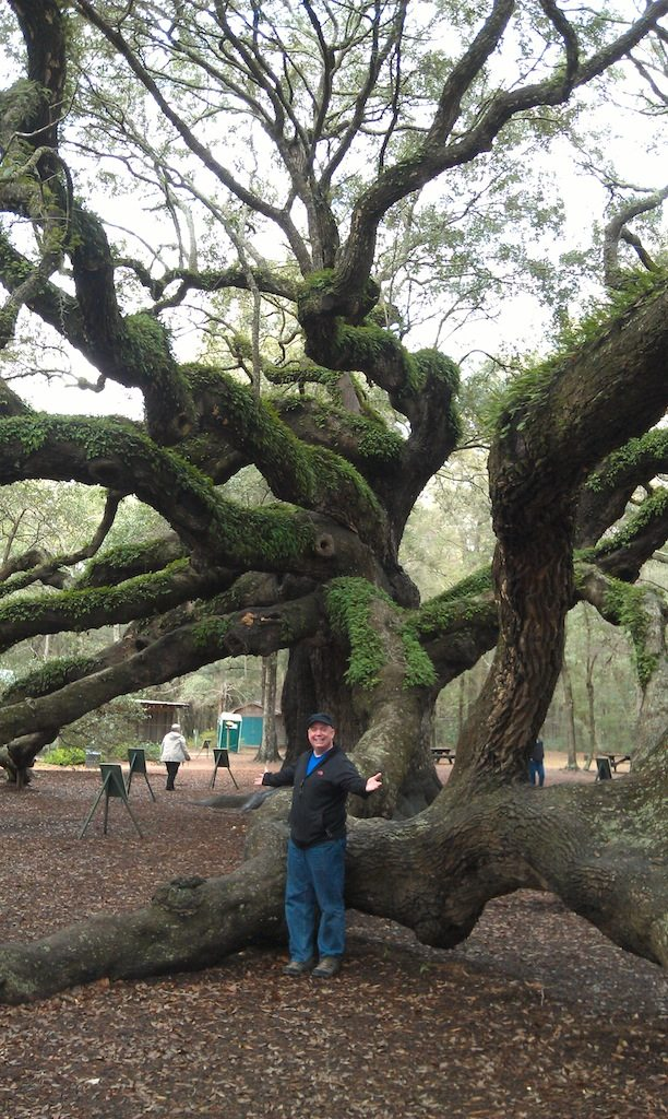 David And The Tree