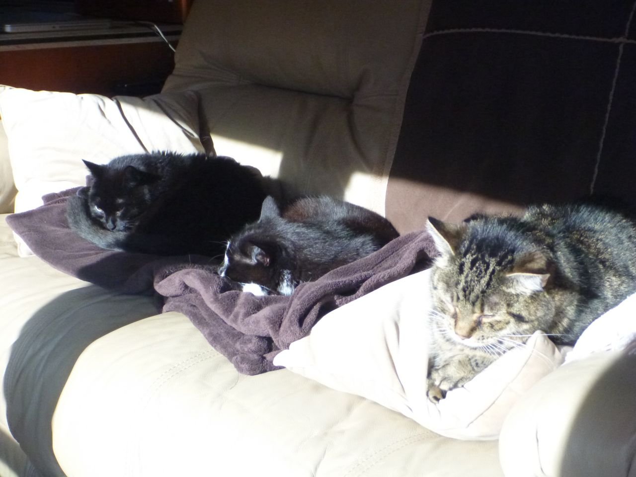 Angel, BK and Whisper Sharing The Couch While Napping