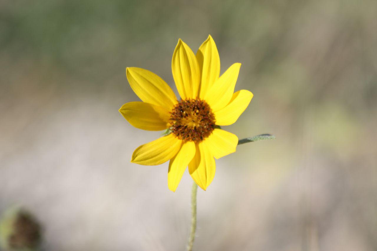 A Wild Flower In The Badlands