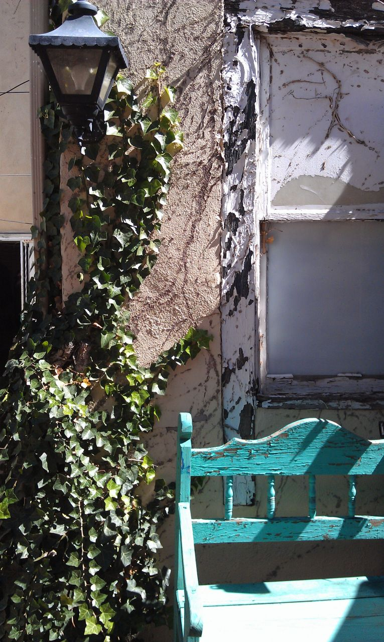 Vines Growing Along A Wall