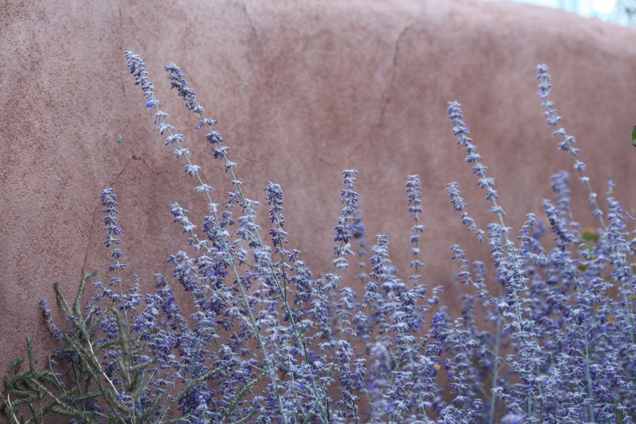 Beautiful Wild Flowers Against An Adobe Wall