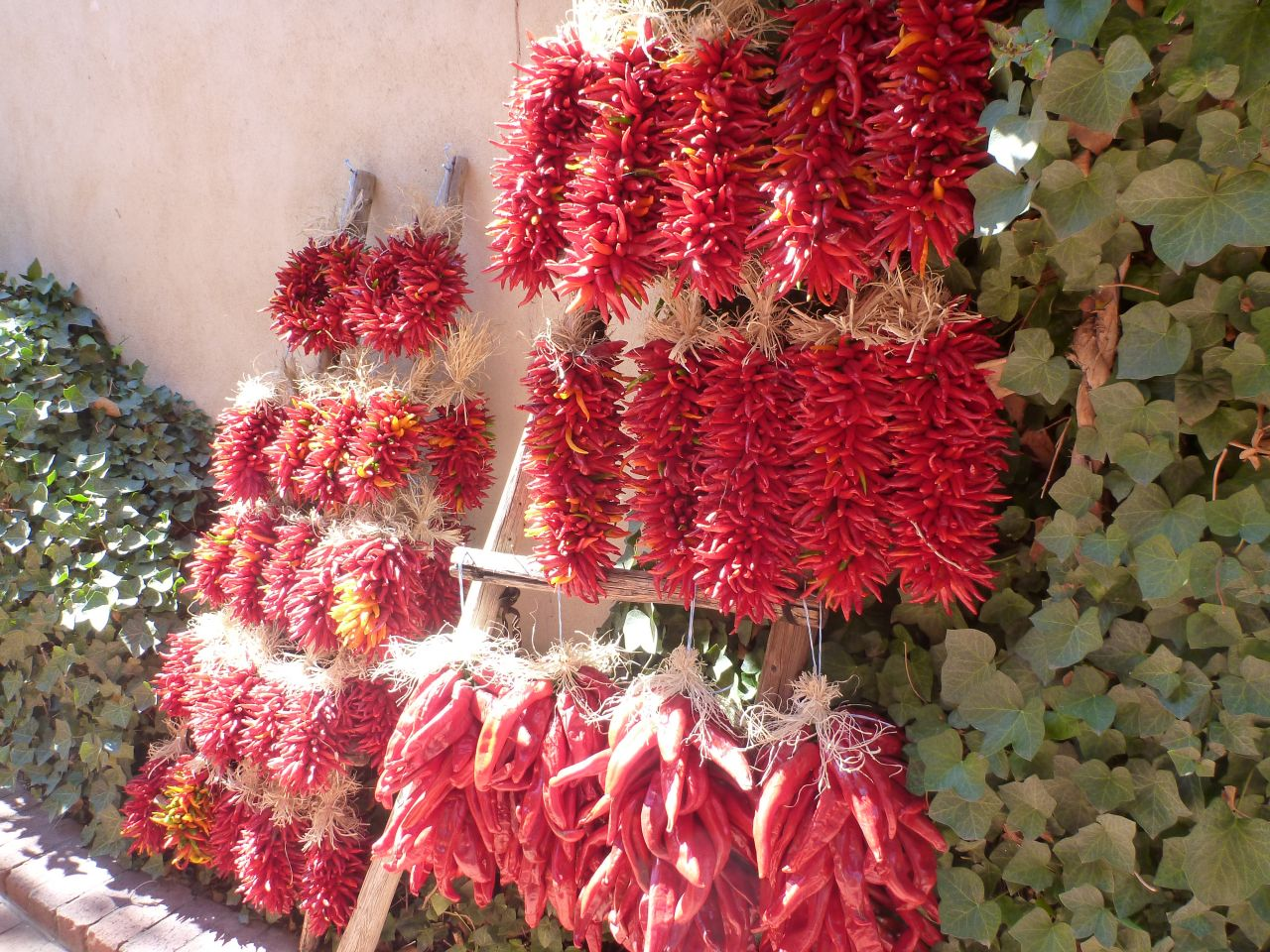 Chiles Drying In The Sun
