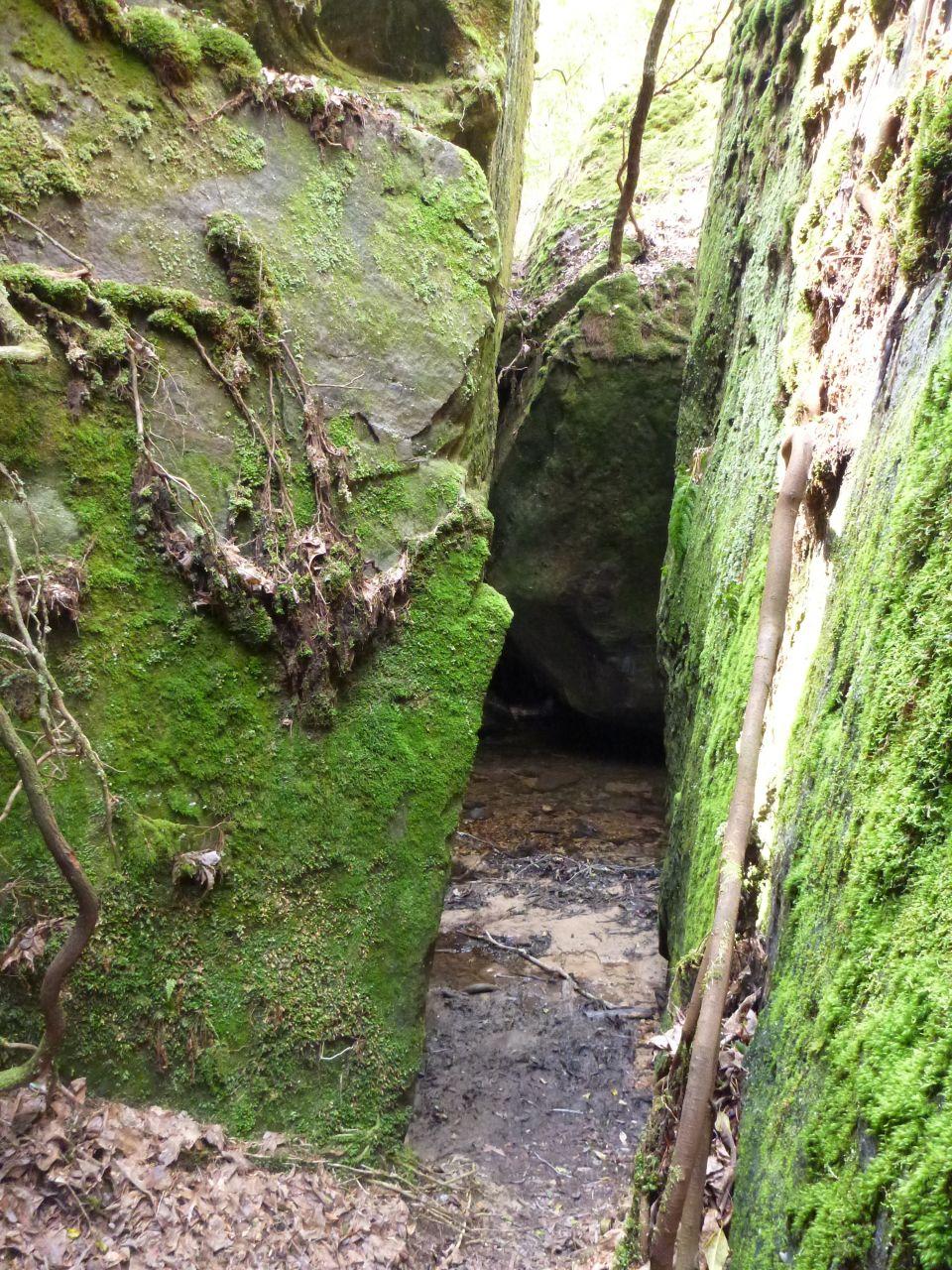 A Narrow Walkway In Dismals Canyon