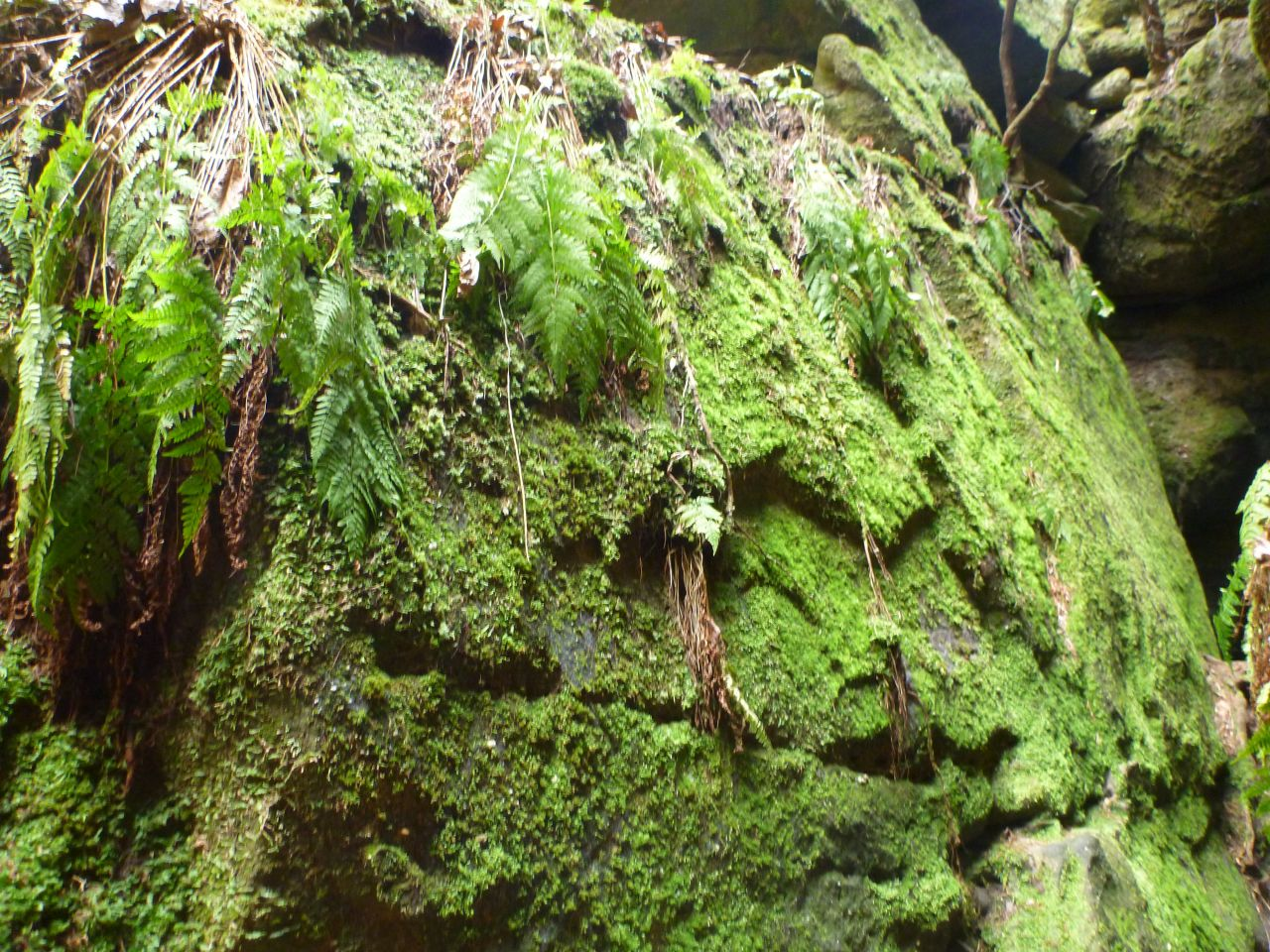 Ferns And Moss Covering Every Surface