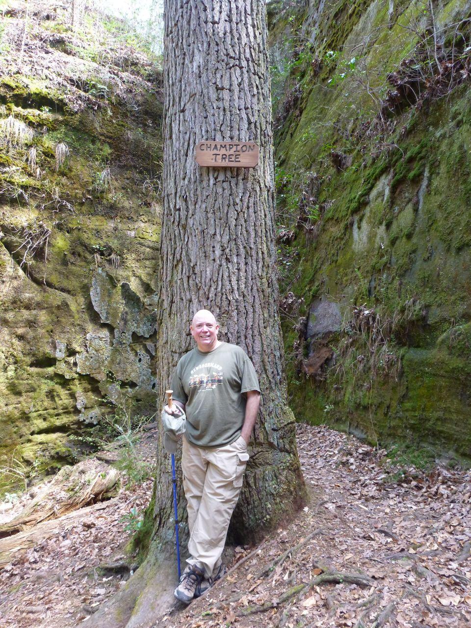 David And The Champion Tree