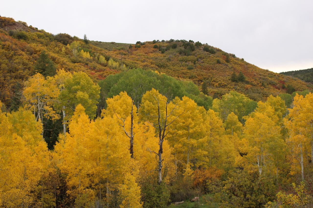 Manti-La Sal National Forest