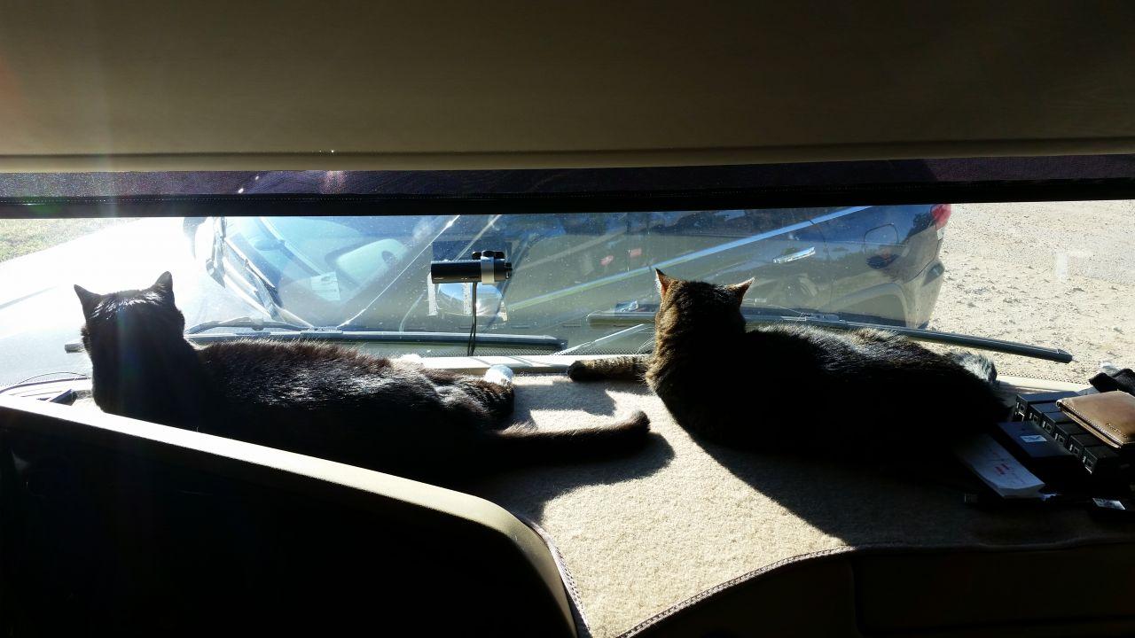 BK And Whisper Enjoying The Sun